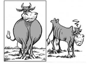 vacas-gordas-flacas-1